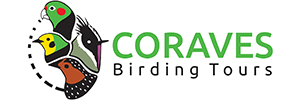Coraves Birding Tours